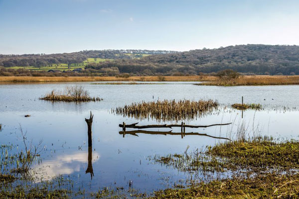 Leighton Moss Nature Reserve